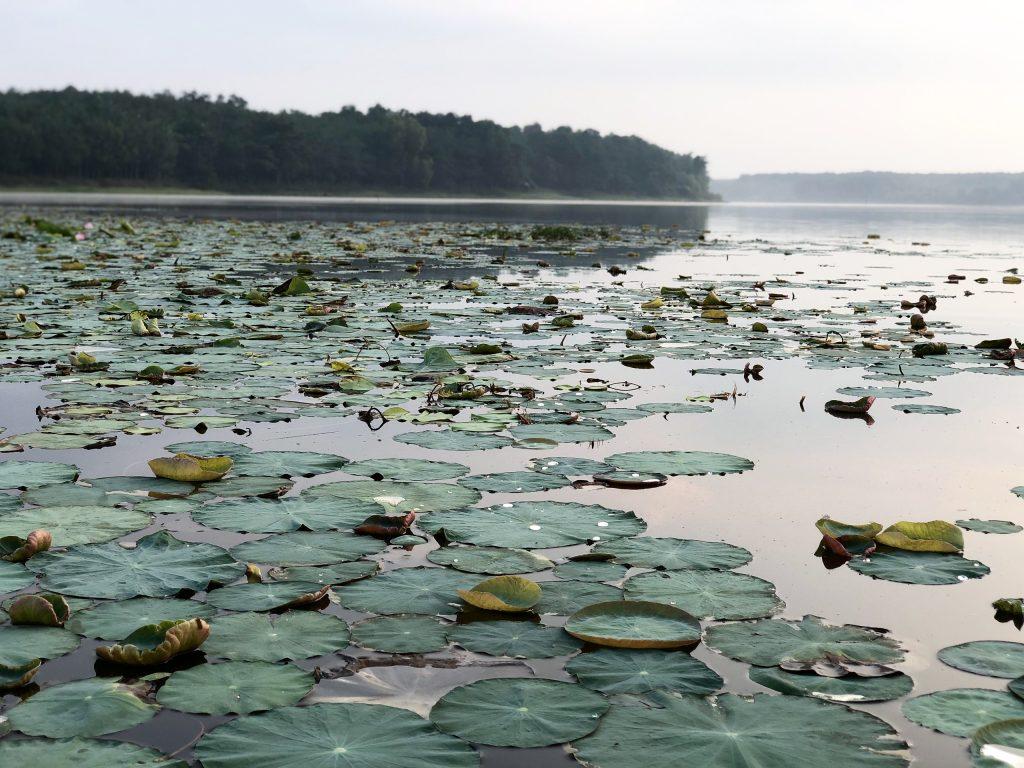 ho suoi giai carmen trai nghiem 4 1024x768 - Bình yên giữa khung cảnh miền quê tại hồ Suối Giai - Phần 108 - hanh-trinh-25, du-lich
